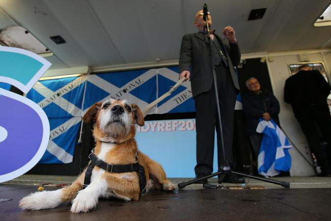 Unfortunately we were only joined by the Wee Ginger Dug's human, Paul Kavanagh