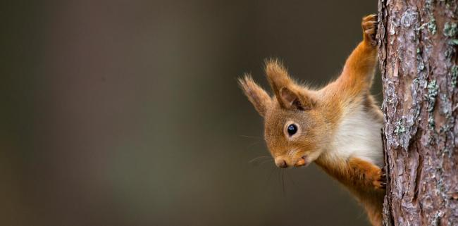 Next year's editions of Springwatch and Autumnwatch will see the hosts following red squirrels